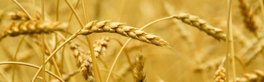 Celebrating the harvest – Psalm126