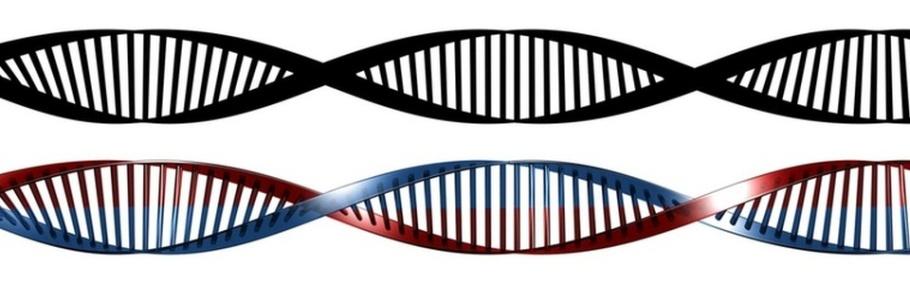 Gregor Mendel: foundedgenetics